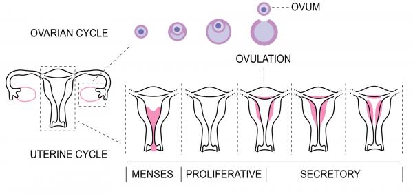 Domande e risposte sulla pillola anticoncezionale e altri contraccettivi ormonali